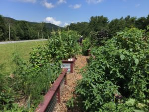 Cover photo for Avery County Community Gardens