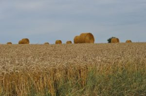 Cover photo for Hay Testing for Livestock