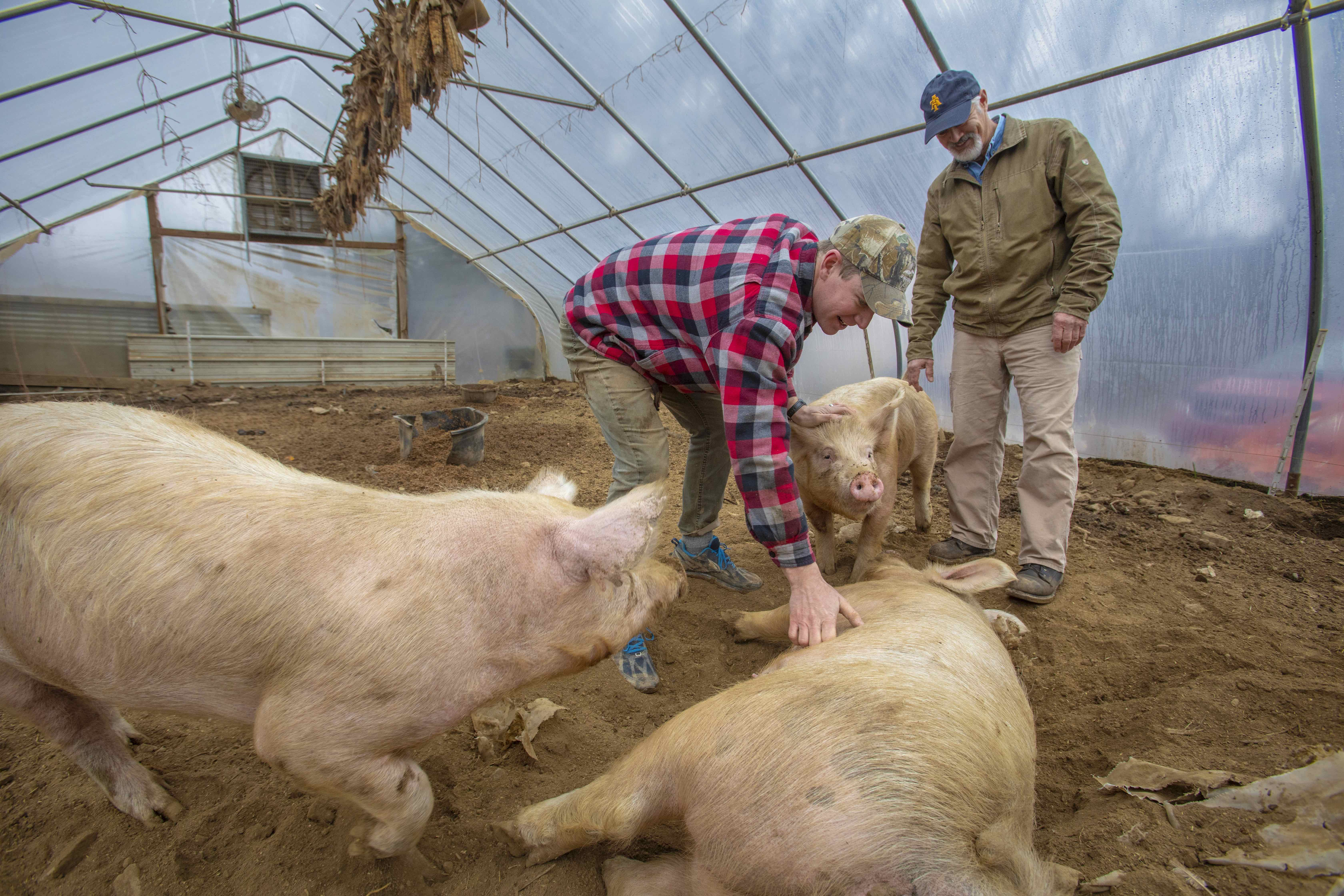 Amos Nidiffer with N.C. A&T State University Cooperative Extension Agent Bill Hoffman tend to pigs
