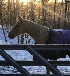 Cover photo for Management of Horses in the Winter