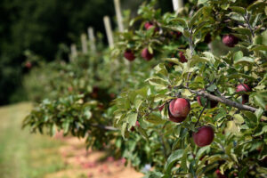 Cover photo for Apple Production, Pest, and Disease Class