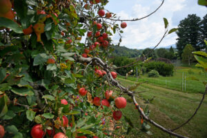 Cover photo for Apple Pruning Workshop