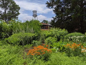 Cover photo for Register Now for a Summer Tour of the Pollinator Paradise Garden!